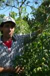 Un paquete agroecológico exitoso: Equilibrio nutricional, MM, biocarbon....  Los frutos hablan por sí solos.