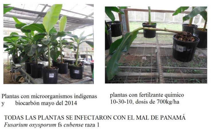 plantas vivas y muertas